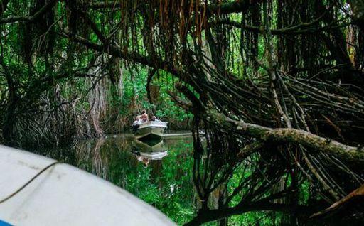 Bentota River Boat Cruise